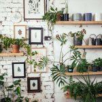 Plant nursery interior