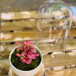 pink terrarium
