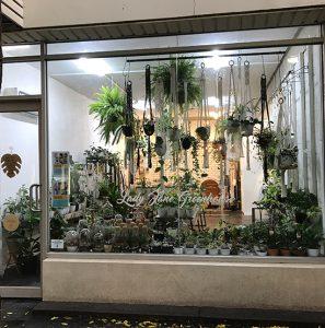 Plant shop window display